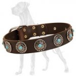 Exclusive Decorated Leather Great Dane Collar with Conchos and Blue Stones