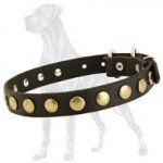 High Quality Leather Great Dane Collar with Brass Circles