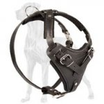 Soft Padded Leather Great Dane Harness for Attack/Agitation Work