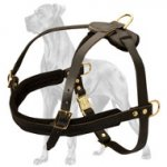Dependable Leather Great Dane Harness