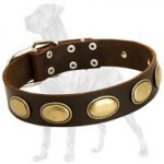High Quality Leather Dog Collar for Great Dane with Vintage Ovals