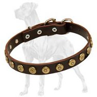 Adjustable Leather Great Dane Collar | Brass Plated Circle Plates
