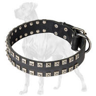 "Studded Leather Great Dane Harness | ""Catepillar"" Design"