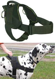 The Best Walking/Training/Pulling Nylon Harness for Great Dane