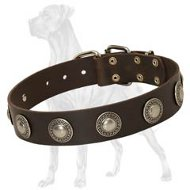 Gorgeous Wide Leather Collar With Silver Conchos for Great Dane