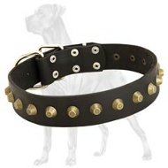 Perfect Studded Leather Collar for Great Dane