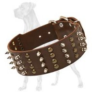 Wide Leather Collar with Studs and Spikes for Great Dane
