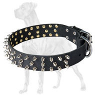Wide Spiked Leather Collar for Great Dane