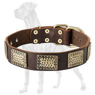 Designer Leather Collar for Great Dane with Brass Plates