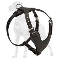 Great-Dane-Dog-Leather-Harness-Heavy-Duty-Stylish