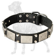 Perfect Great Dane Studded Leather Collar | Vintage Nickel Plates