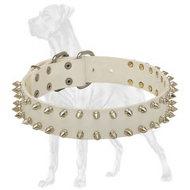 Gorgeous White Leather Great Dane Collar for Walking