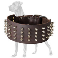 Spiked 3 Inch Leather Great Dane Collar for Walking