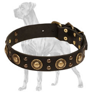 """Mystery is Inside"" Leather Collar for Great Dane with Brass Conchos and Studs"