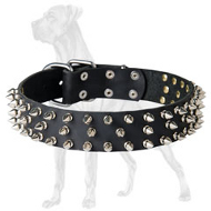 Deluxe Spiked Leather Dog Collar for Great Dane