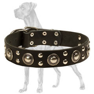 Elegant Leather Great Dane Collar with Nickel Plated Conchos and Studs
