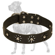 """Elegant Flower"" Leather Dog Collar for Great Dane Walking"
