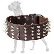 Delightful Leather Great Dane Collar with Nickel Pyramids and Spikes