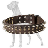 Chic Leather Great Dane Collar with Brass Studs and Nickel Spikes