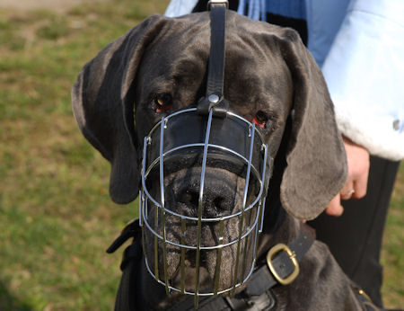 Big-wire-dog-muzzle