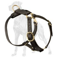 Walking and Tracking Leather Lightweight Great Dane Harness