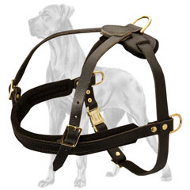 Feature-Rich Leather Great Dane Harness with Padded Straps
