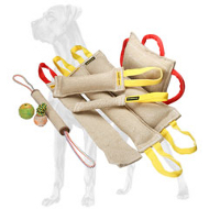 Special Offer - 9 Tools (3 of Them for Free) in One Great Dane Training Set