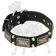 Strong Leather Great Dane Collar with Vintage Plates