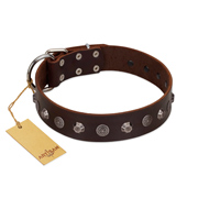 """Dark Chocolate"" Handmade FDT Artisan Brown Leather Great Dane Collar with Studs"