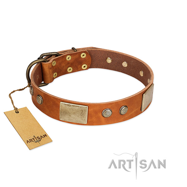 Easy wearing full grain leather dog collar for basic training your pet