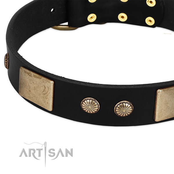 Genuine leather dog collar with embellishments for daily use