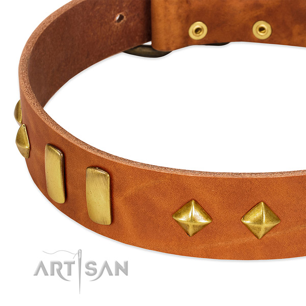 Everyday walking leather dog collar with exceptional studs