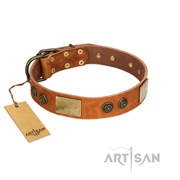 Studded genuine leather dog collar for everyday walking