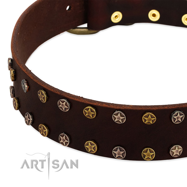 Walking full grain leather dog collar with stylish design embellishments