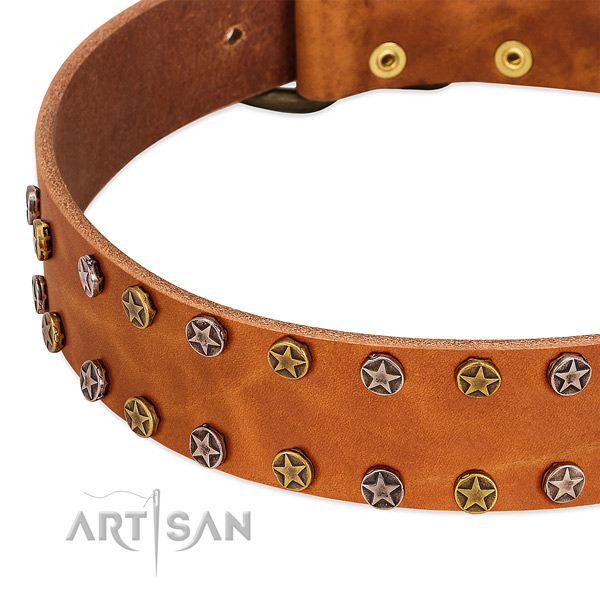 Walking full grain genuine leather dog collar with stunning embellishments
