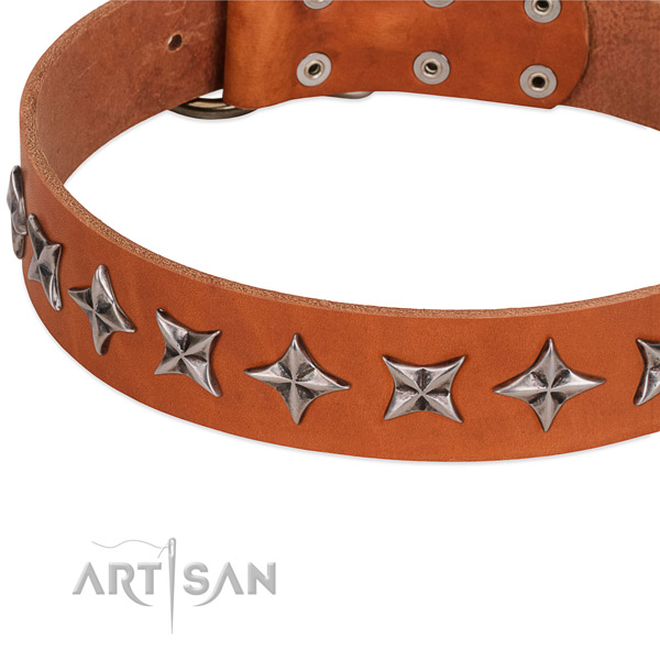 Fancy walking adorned dog collar of top quality natural leather