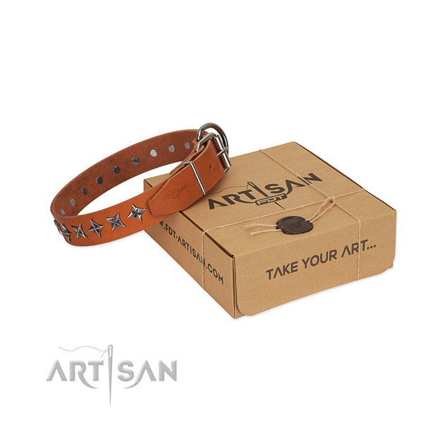 Stylish walking dog collar of fine quality full grain natural leather with embellishments
