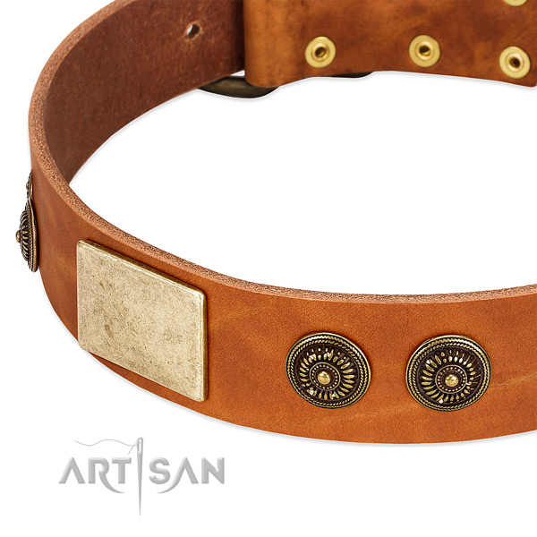 Trendy dog collar made for your stylish doggie