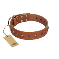 """Silver Age"" Fashionable FDT Artisan Tan Leather Great Dane Collar with Silver-Like Studs"