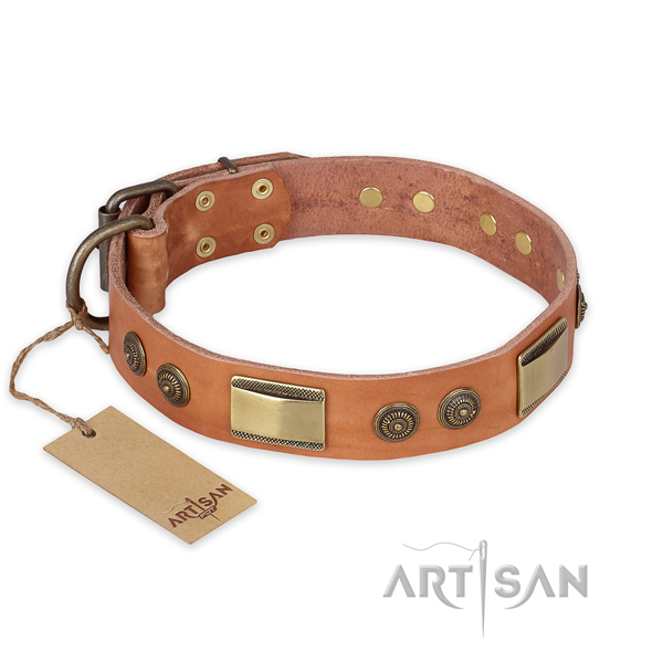 Walking full grain leather collar with adornments for your canine