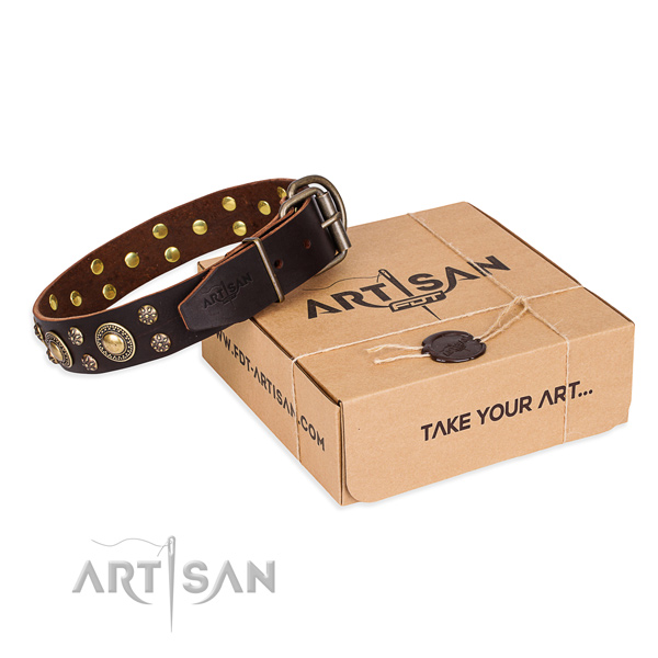 Day-to-day leather dog collar with luxurious adornments