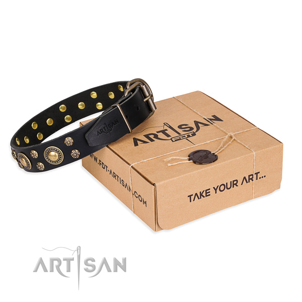 Day-to-day leather dog collar with exceptional studs