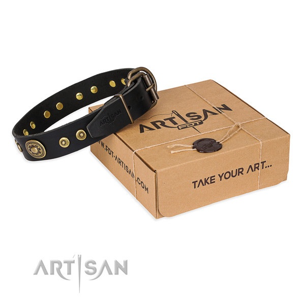 Impressive full grain natural leather dog collar for daily use