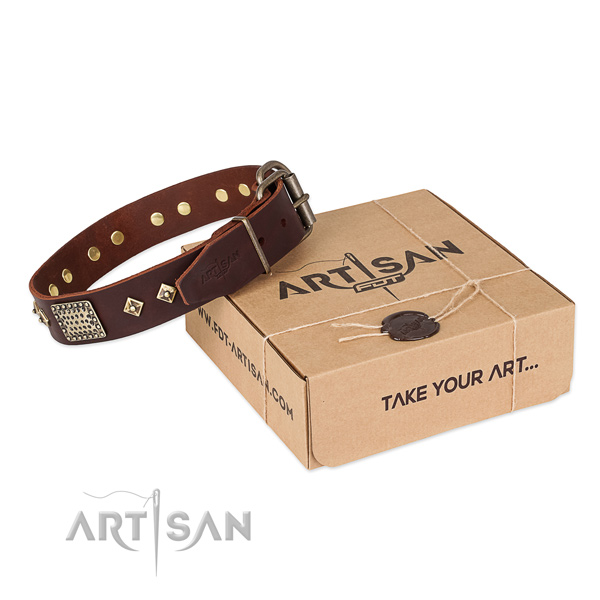 Top notch leather dog collar for walking in style