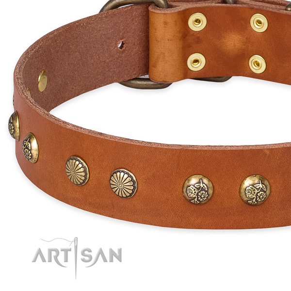 Snugly fitted leather dog collar with almost unbreakable brass plated set of hardware