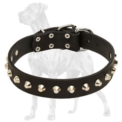 Stylish Great Dane collar for everyday walks