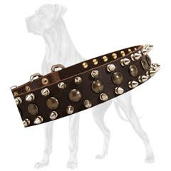 Spiked natural leather Great Dane collar