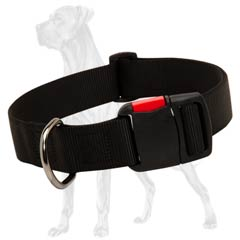 Great-Dane-Breed-Nylon-Collar-Adjustable