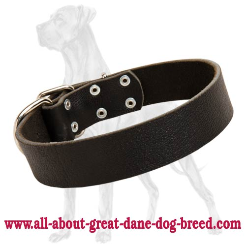 Great Dane Wide Leather Collar Polished Edges