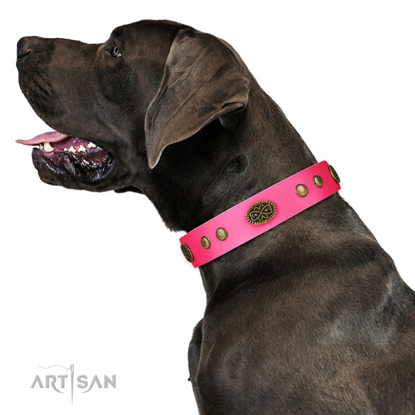 Corrosion resistant D-ring on natural leather dog collar for everyday walking